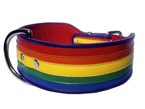 "The Rainbow Perfect for your ""Toto"" (as seen on the BBC) - Holly & Lil Collars Handmade in Britain, Leather dog collars, leads & Dog harnesses."
